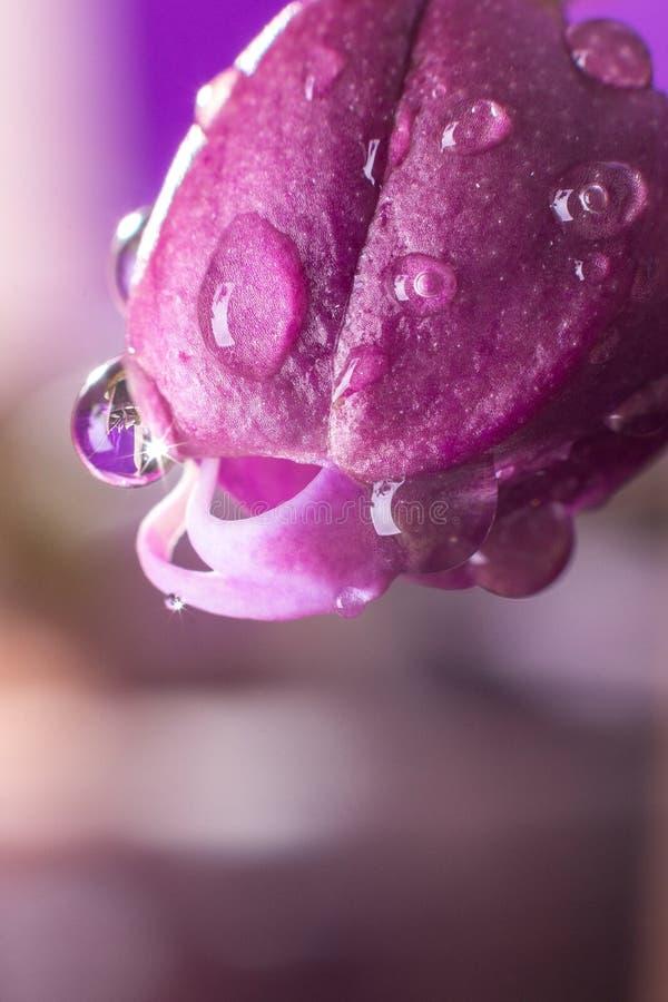 成长与水下落的兰花在紫色背景 免版税图库摄影