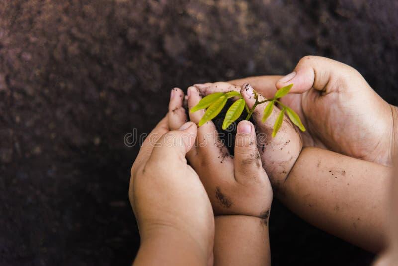 成长树与黑黏土的绿色背景 与金钱、保存的金钱和生长手的树 库存图片