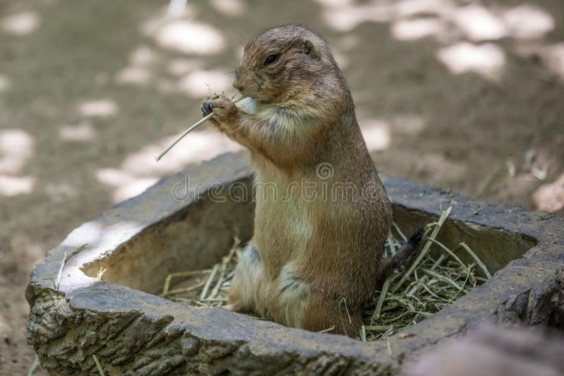 我们去新加坡公园时,河野生动物园 免版税库存照片