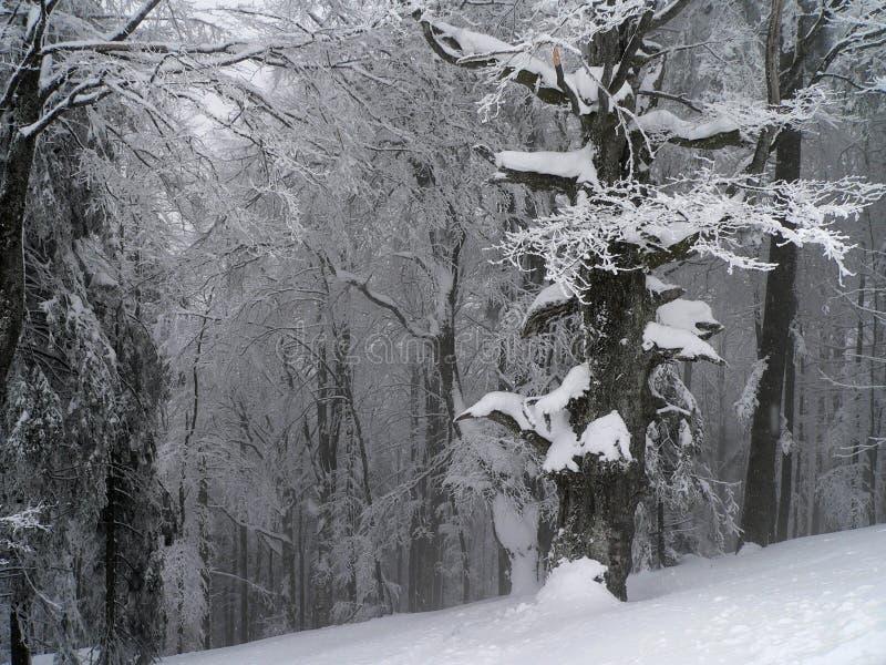 我使冬天环境美化 免版税库存照片