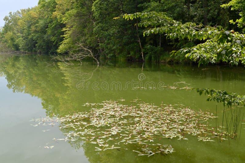 Download 我保护了湖,长满与木头 库存照片. 图片 包括有 平稳, 保护, 夏天, 长期, 长满的, 增长, 海岸 - 72359626