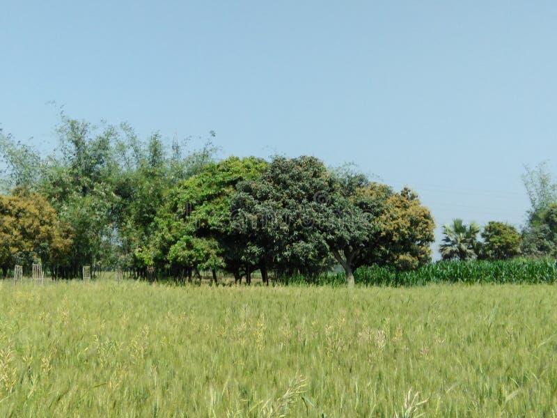 我可爱的庭院树图象 库存照片