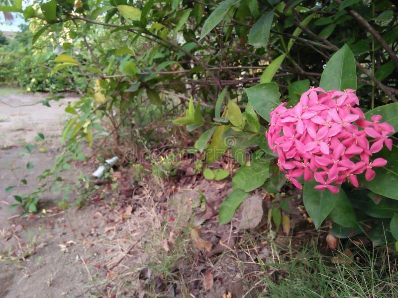 我在城市公园区域可以找到小红色花 免版税库存图片