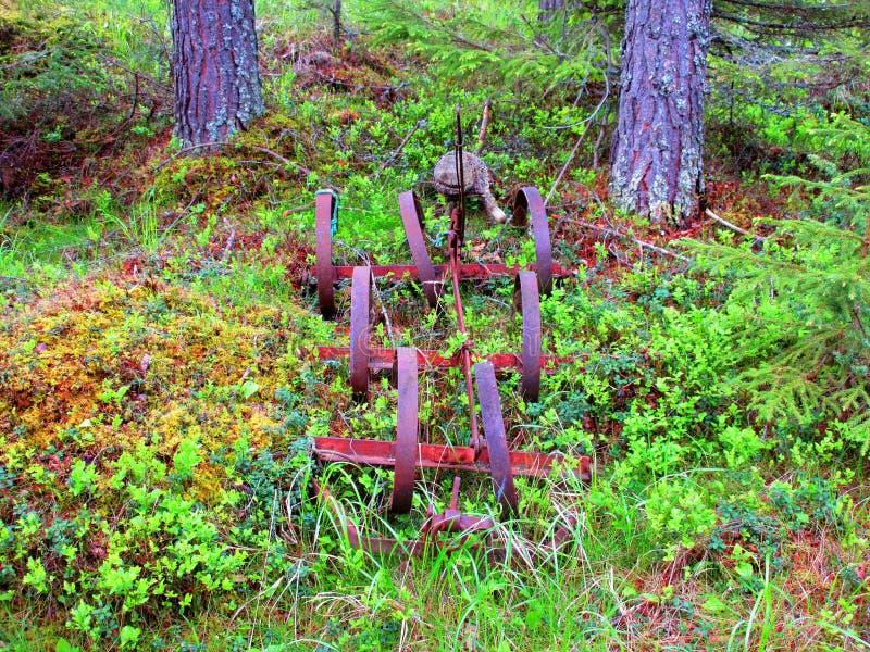 我在森林发现这把老马耙被留下 免版税库存图片