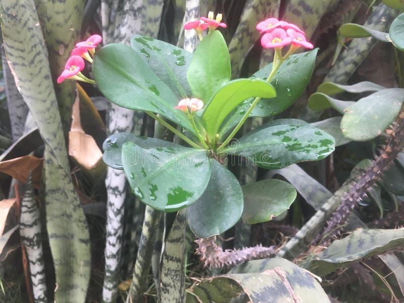 我在雨以后的美丽的花 库存照片