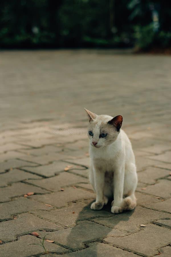 我小的小猫 图库摄影