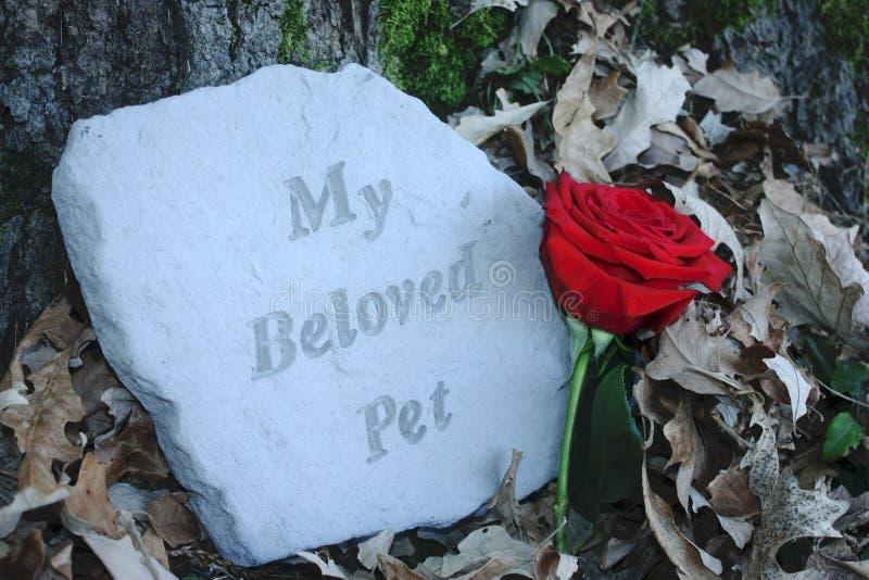 我心爱的宠物纪念品 库存图片