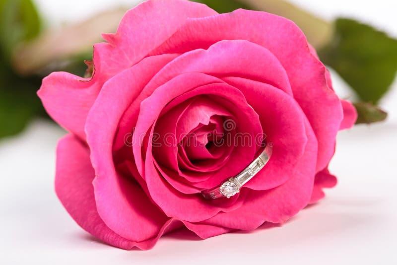 我是一朵白色背景上带戒指的粉红玫瑰 免版税图库摄影