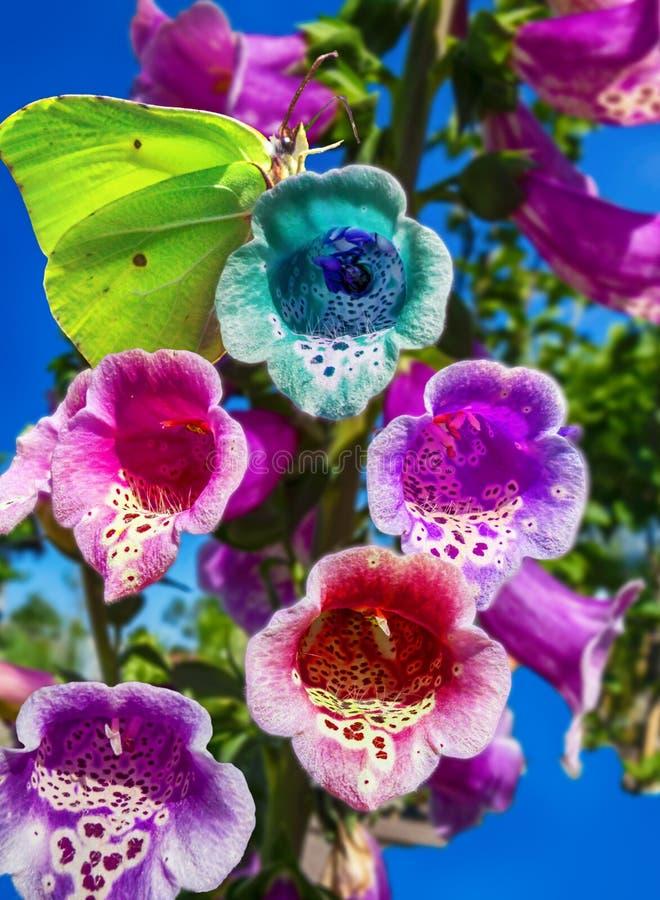 我爱夏天、大胆的颜色和蝴蝶到处 免版税库存照片