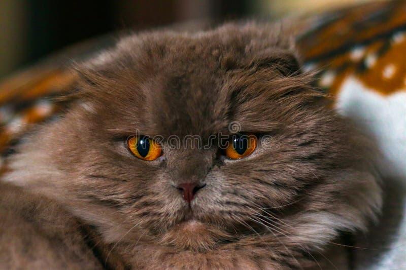 我的宠物是我的猫 库存图片
