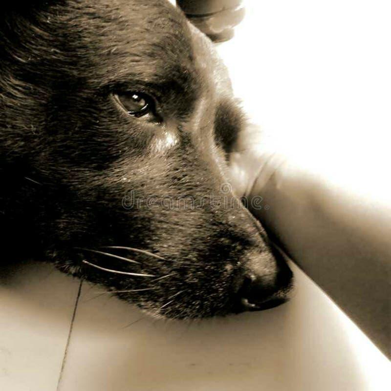 我的宠物 图库摄影