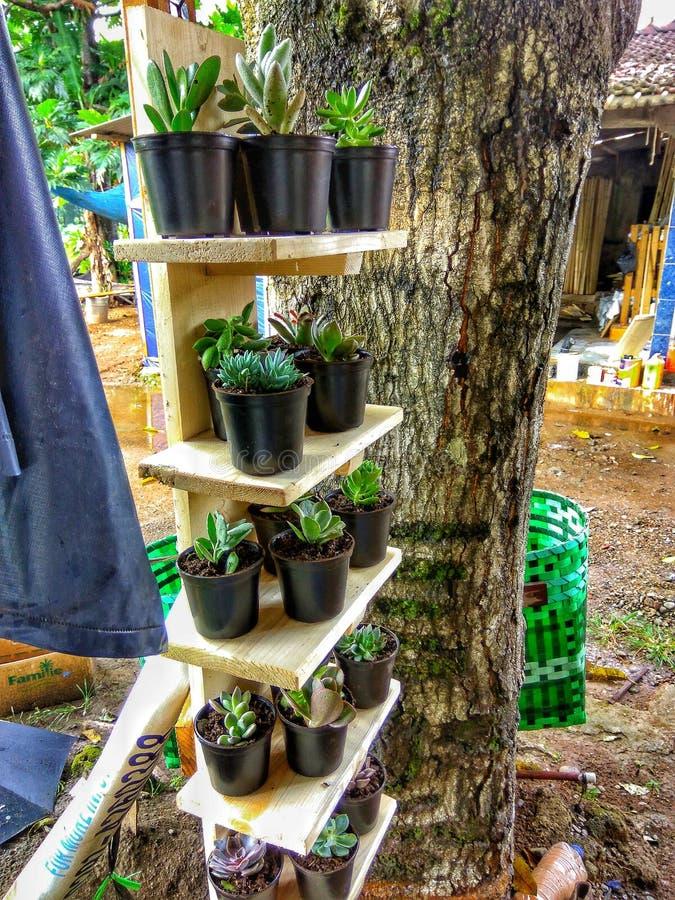 我的小植物 库存图片