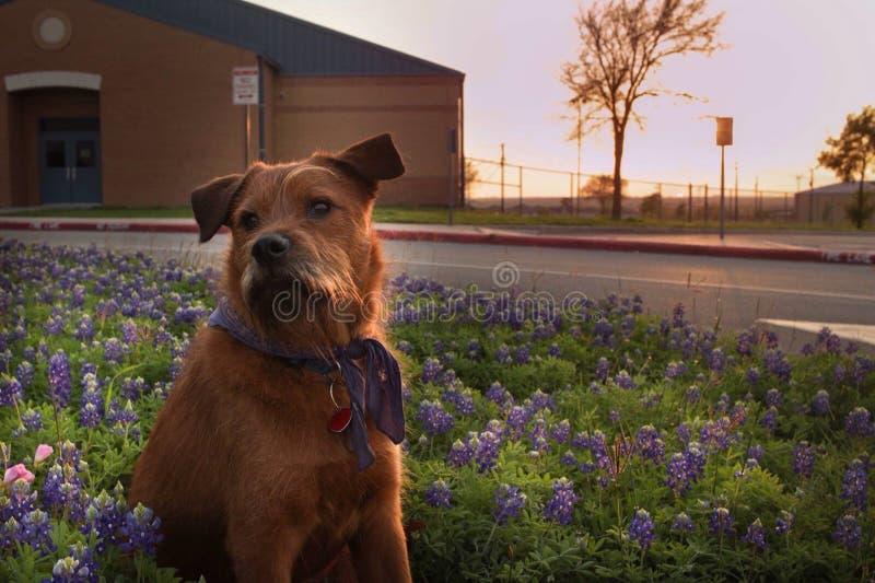 我的小狗莱纳斯 库存照片