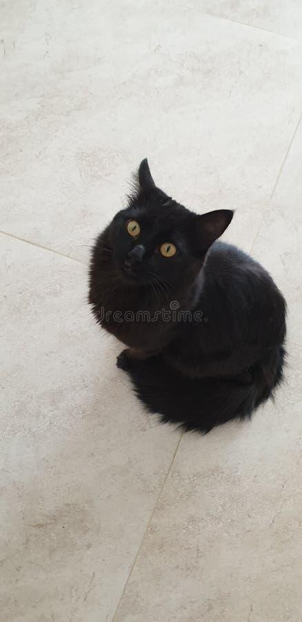 我的小猫 免版税库存图片