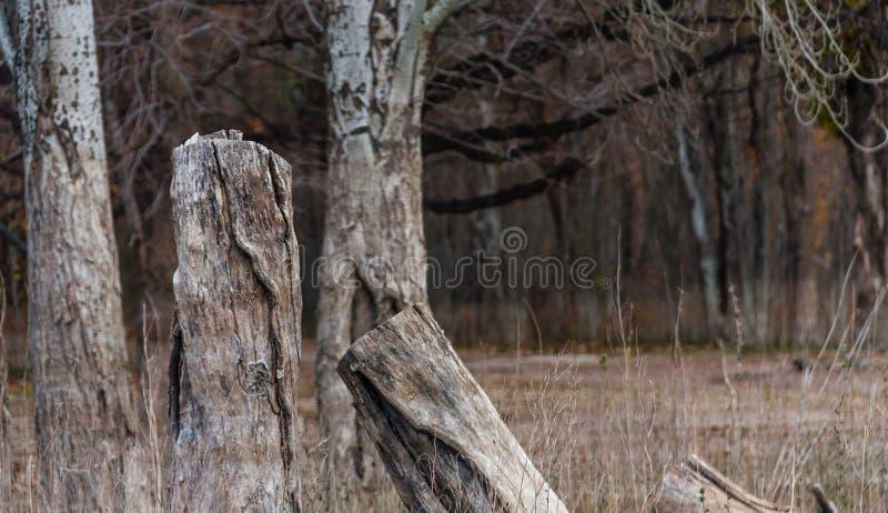 我的树不死站立 免版税图库摄影