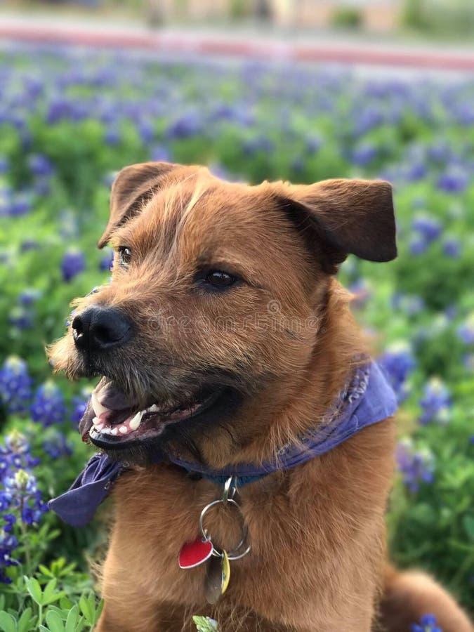 我的狗莱纳斯 库存照片