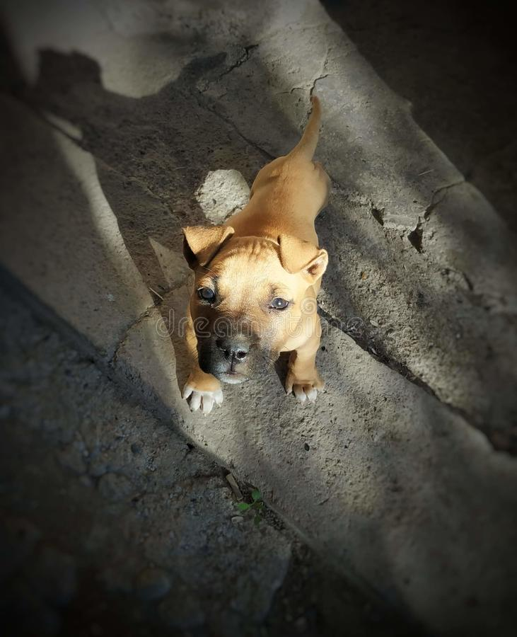 我的狗 库存照片