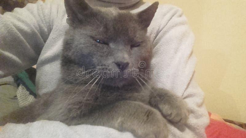我的猫 免版税图库摄影
