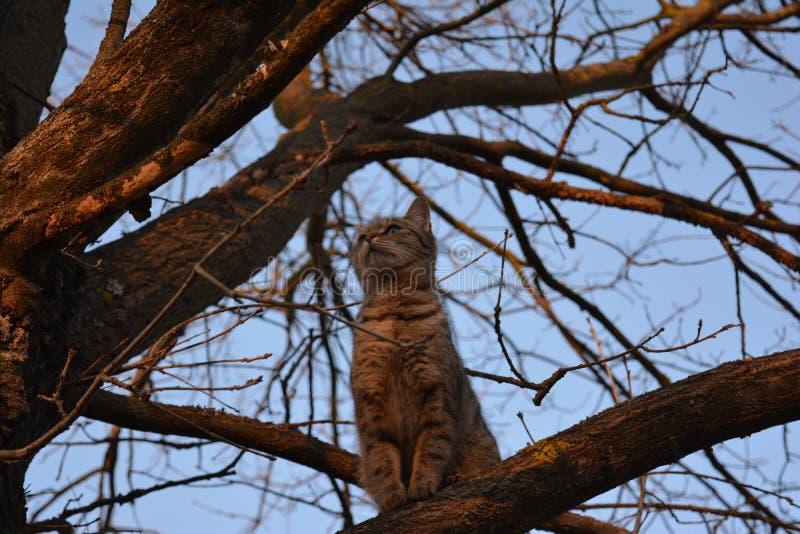 我的猫! 免版税库存照片