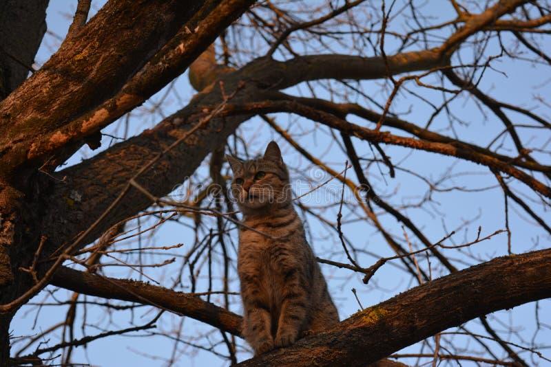 我的猫! 免版税库存图片