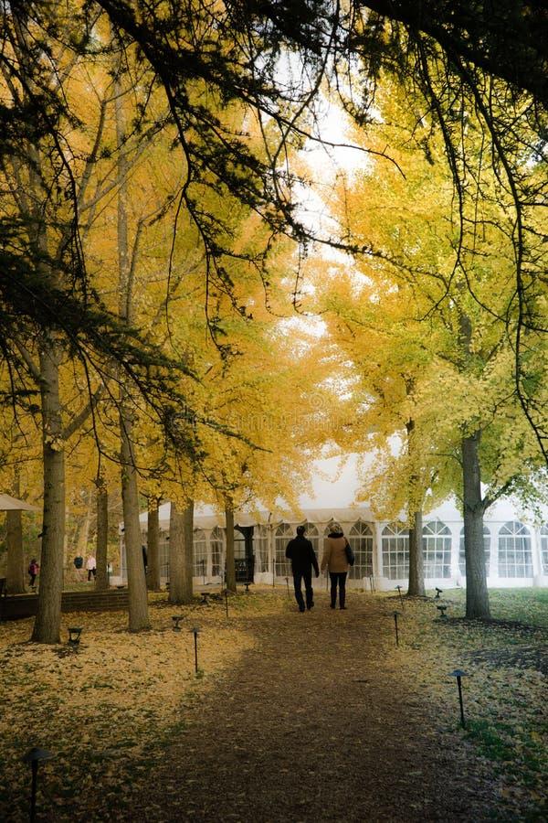 我的秋天天 库存照片