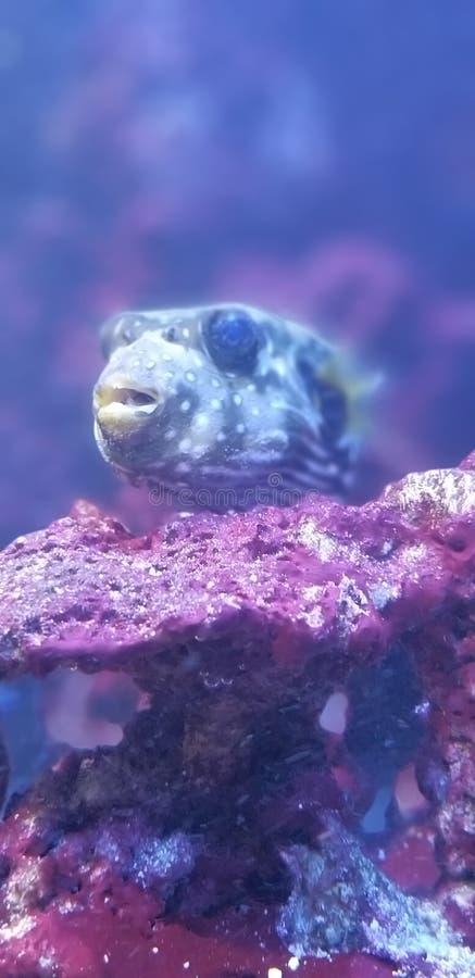我的鱼小玩意儿 免版税库存图片