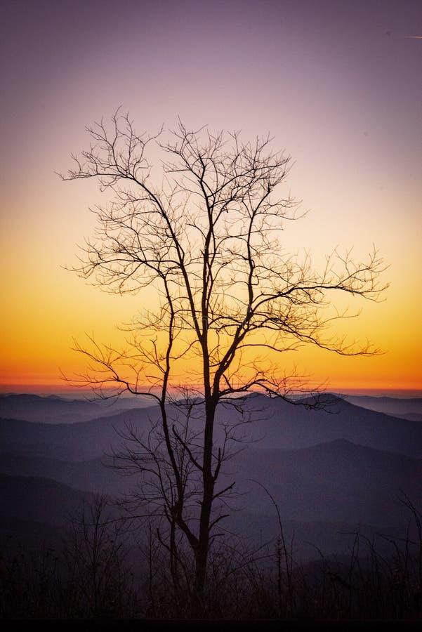 我的Cherohala树 库存照片
