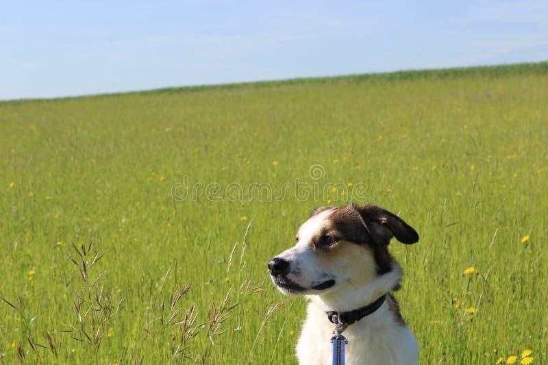 我美丽的狗 免版税库存图片
