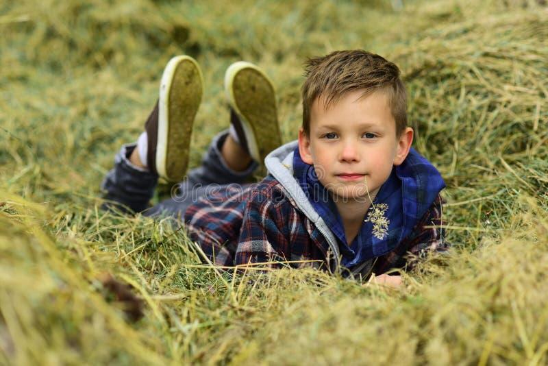 我自己的乐趣 小男孩放松在麦田 农田的小男孩 耕种和生长麦子 享用 库存图片