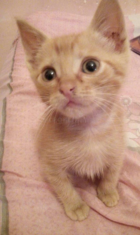 我逗人喜爱的猫 库存图片