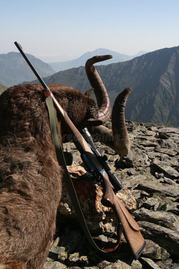 战利品白种人寻找的Tur步枪在山 免版税库存照片