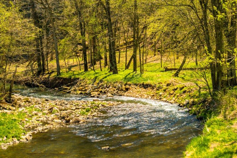 战战兢兢流动在早期的春天的水獭小河 库存图片