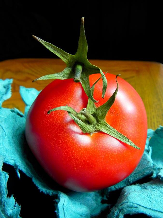 战斗的蕃茄花萼 库存图片