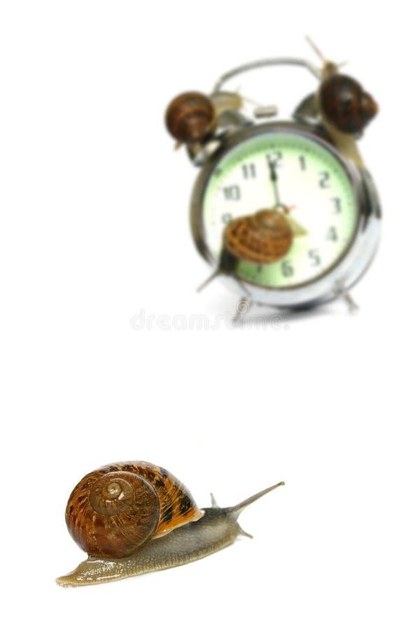 截止日期蜗牛 库存照片