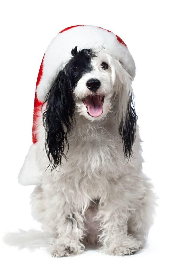 戴圣诞老人帽子的逗人喜爱的小狗。   库存图片