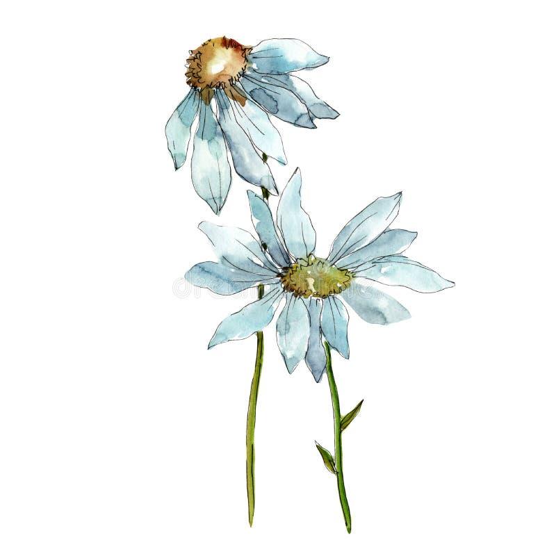 戴西 花卉植物的花 被隔绝的野生春天叶子野花 库存例证