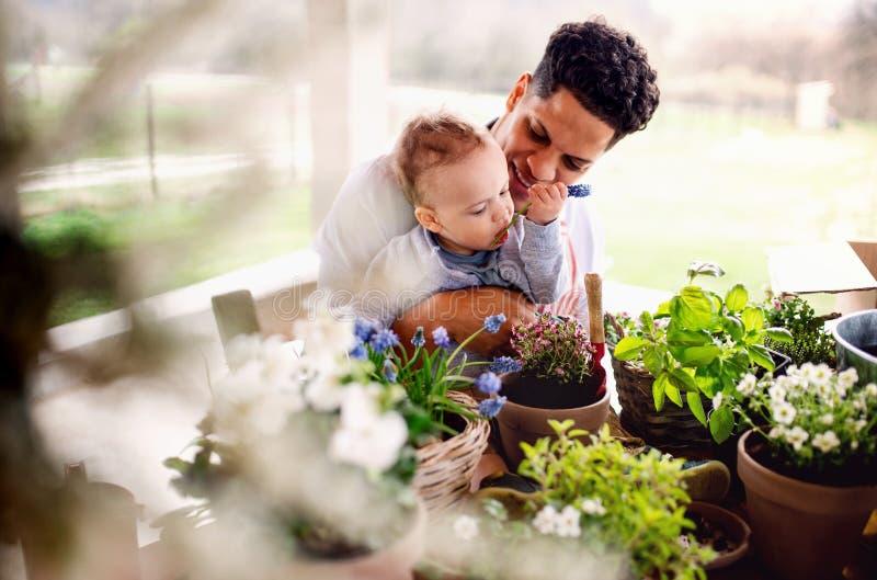 户内父亲和在家小小孩儿子,浇灌花 库存图片