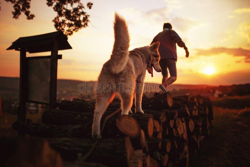 户外一个人和他多壳的狗的背面图在与五颜六色的天空的日落与从太阳背景的透镜火光 图库摄影