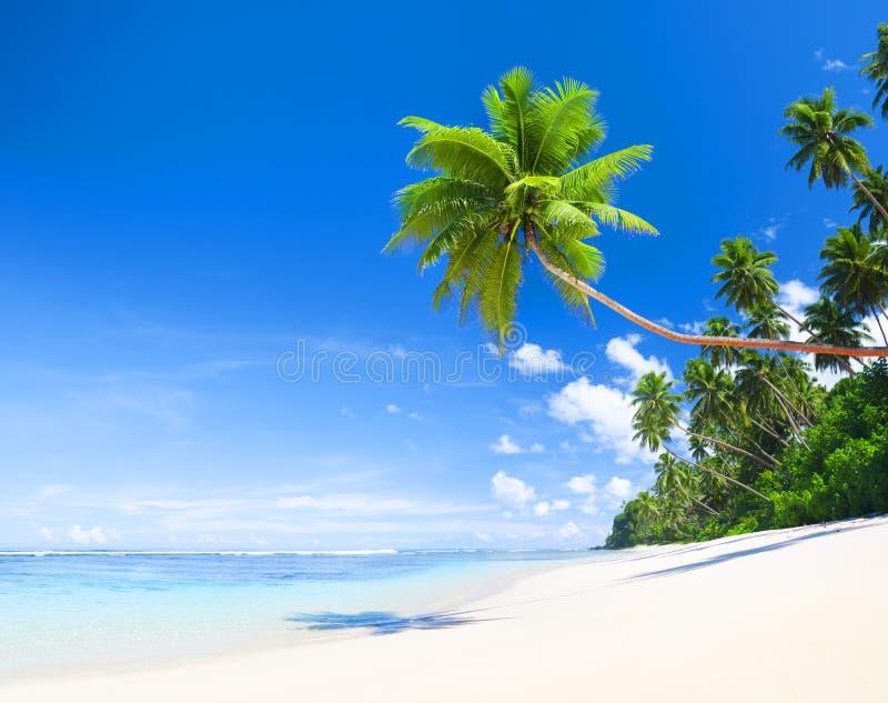 户外夏令时自然海滩概念 库存照片