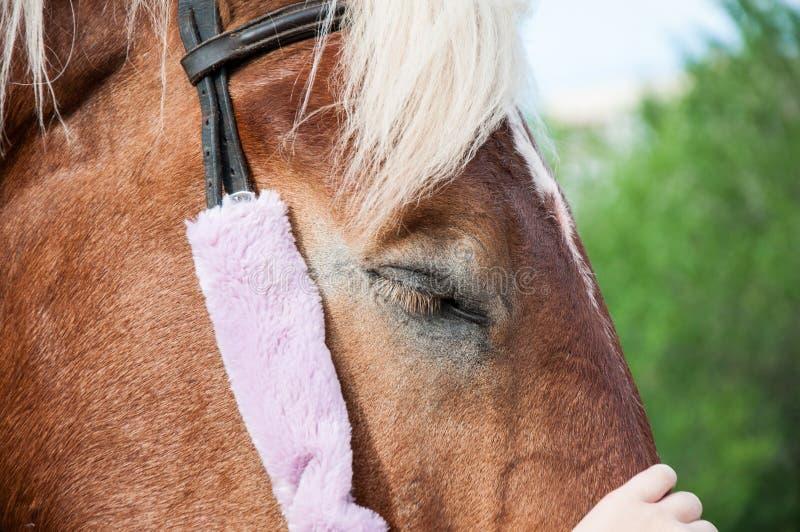 Download 户外家庭马 库存照片. 图片 包括有 农场, 茴香, 本质, 公马, 骑马, 尾标, 膳食, 体育运动, 野生生物 - 72359112