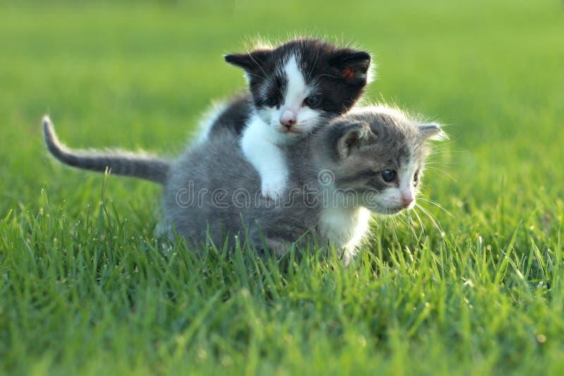 Download 户外小猫在自然光 库存照片. 图片 包括有 纵向, 水平, 宠物, 背包, 射击, 家谱, 纯血统, 小猫 - 30329210