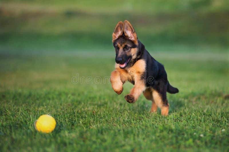 户外德国牧羊犬小狗在夏天 库存照片