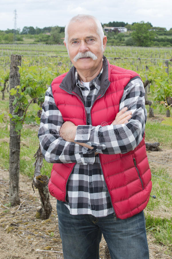 户外殷勤年长人在wineyards 免版税库存照片