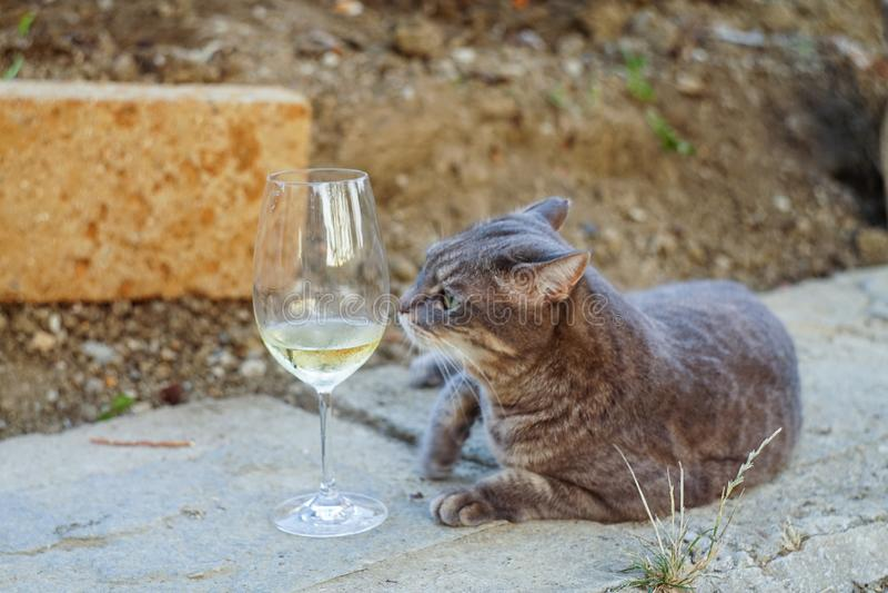 户外的葡萄酒和猫 免版税库存图片