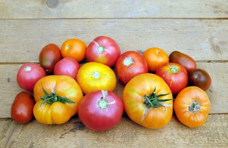 户外静物画用brownn木桌表面上的成熟红色和橙色蕃茄作为背景 图库摄影