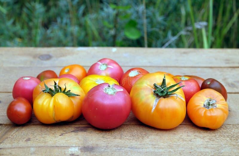 户外静物画用brownn木表面上的成熟红色和橙色蕃茄在绿色迷离前种植背景 免版税图库摄影