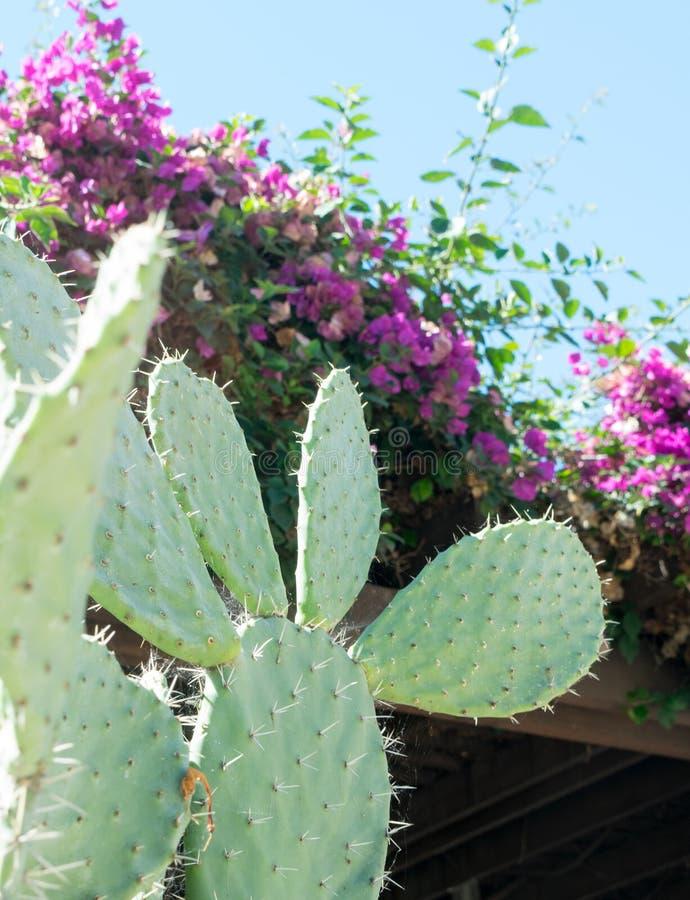 户外仙人掌植物在紫色花附近 免版税库存图片