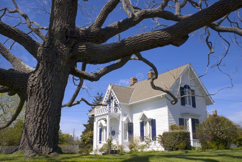 房子图标式的结构树白色 库存照片