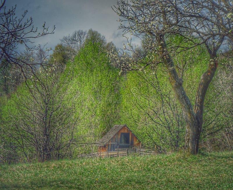 房子在森林里! 库存照片