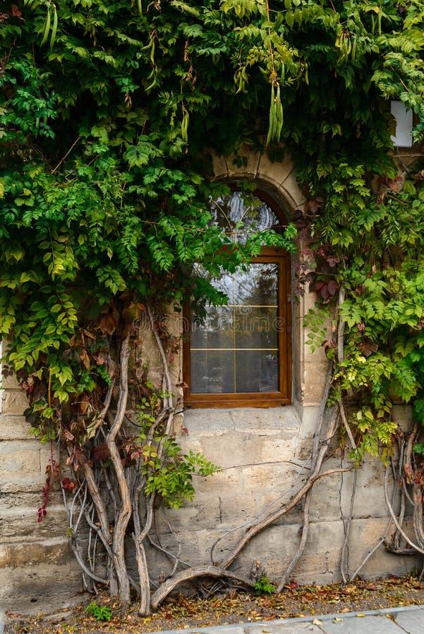 房子的窗口美丽的丛林的在纹理墙壁 库存图片